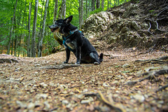 AMFD3314 (amfdesign.de) Tags: 2019 bearbeitet pentaxk3ii smcpentaxda1650mmf2 8edalifsdm schliersee see bayern bavaria deutschland de natur hund dog pet tier