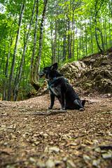 AMFD3318 (amfdesign.de) Tags: 2019 bearbeitet pentaxk3ii smcpentaxda1650mmf2 8edalifsdm schliersee see bayern bavaria deutschland de natur hund dog pet tier
