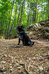 AMFD3317 (amfdesign.de) Tags: 2019 bearbeitet pentaxk3ii smcpentaxda1650mmf2 8edalifsdm schliersee see bayern bavaria deutschland de natur hund dog pet tier
