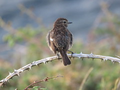 IMG_5939 (jesust793) Tags: pájaros birds naturaleza nature