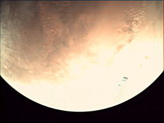 19-165_13.29.35_VMC_Img_No_37.png (ESA - Mars Express) Tags: mars marsexpress esa vmc marswebcam