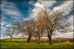 Sous les nuages... Under the clouds (Jeanluc Verville) Tags: arbres trees hamnord groupenuagesetciel