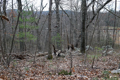 rocky oak woods on S-facing slope (ophis) Tags: harlandst milton bluehill woods bluehills