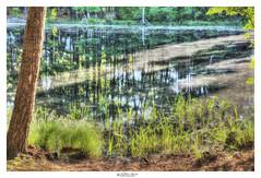 """""""The soul is like pollen: we remember it. (L'âme est comme le pollen : - Elle fait souvenir d'elle.)""""  ― Charles de Leusse, Le Sablier (Pearce Levrais Photography) Tags: landscape plant tree grass water reflection outside outdoor sony a7r3 lake pond pollen bark"""