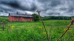 renewal... (BillsExplorations) Tags: fence fencefriday barn hff field green renewal old vintage forgotten oldbarn abandoned