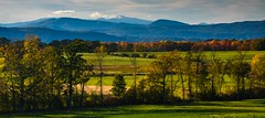 Late Afternoon, Shoreham, VT (Michael Burke Images) Tags: vt fallcolors portfolio fall shoreham cow