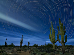 Star Trails Above Saguaros - Scottsdale, Arizona (mattsuessphoto) Tags: startrails nightsky star trails night sky saguaro saguaros cactus longexposure vle arizona scottsdale timeexposure moonlight stars clouds getolympus omdem1x