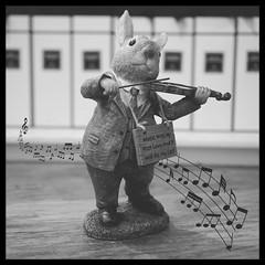 Music (tanyalinskey) Tags: sign rabbit square blackwhite musicinbw smileonsaturday