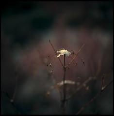 spring scenery #12 (moonchild1111) Tags: carlzeissfplanar110mmf2t hasselblad2000fc kodakportra160 6x6 negative