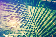 Creative tropical green leaves layout. Tropical palm background. (Artem Beliaikin) Tags: green tropical spring leaves palm nature natural background pattern summer leaf plant foliage tree garden texture forest jungle abstract tropic exotic art dark wallpaper bright environment botanical vintage detail branch color sea lush shadow paradise season element beauty design greenery verdant rainforest concept stripes beach botany flora hawaii vibrant decoration