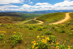 Winding Road (KPortin) Tags: road balsamroot wildflowers valley view oregon spartalane