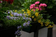 Balcony (Julysha) Tags: flowers balcony summer evening june 2019 acr d850 sigma241054art