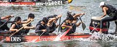 D5X_0918 (footeefok) Tags: singapore dragonboat marinabay watersports sports peoples water boats drums dbs dbsmarinaregatta dragonboatrace race