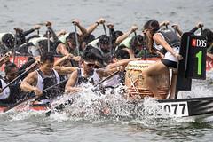 D5X_1312 (footeefok) Tags: singapore dragonboat marinabay watersports sports peoples water boats drums dbs dbsmarinaregatta dragonboatrace race