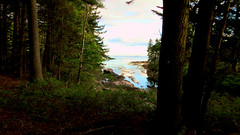 Out of the Woods (ihamr) Tags: harpswell maine view ihamr atlantic