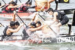 D5X_0658 (footeefok) Tags: singapore dragonboat marinabay watersports sports peoples water boats drums dbs dbsmarinaregatta dragonboatrace race
