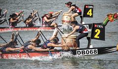 D5X_1201 (footeefok) Tags: singapore dragonboat marinabay watersports sports peoples water boats drums dbs dbsmarinaregatta dragonboatrace race