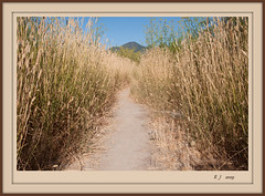 Path to the Mountain (Gillian Everett) Tags: path mountain duc 1115