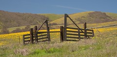 Cattle Gate and Balsamroot (Michael Burke Images) Tags: columbiagorge spring wa fencepost columbiahillsstatepark balsamroot