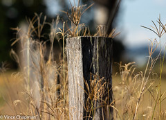 On the Fence... (mandark_898) Tags: wood country fence post fencepost grass brown