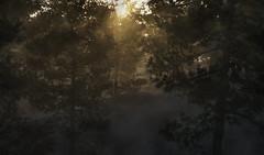 Through the Trees (Just Add Light) Tags: terragen forest fog sun forêt 3d
