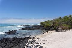 Love beach . Playa del Amor (José X) Tags: beach playa ocean oceano islaisabela galapagosislands isabelaisland volcanicrocks rocasvolcanicas whitesand arena mangrovetrees arbolesdemangle nature naturaleza