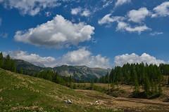 Sui prati di Casera Chianseveit (paolo-p) Tags: montagna mountain alberi trees nuvole clouds caseramediana socchieve caserarazzo vigodicadore