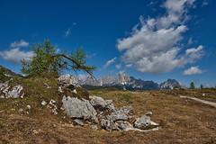 Il larice (paolo-p) Tags: montagna mountain alberi trees larici larches caserarazzo vigodicadore nuvole clouds