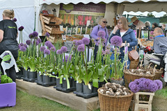 Alium Stall (Bri_J) Tags: rhs chatsworthflowershow2019 chatsworthhouse edensor derbyshire uk chatsworth flowershow nikon d7500 hdr alium stall flowers