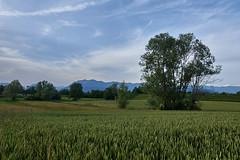 Fontanabona (paolo-p) Tags: alberi trees nuvole clouds fontanabona pagnacco