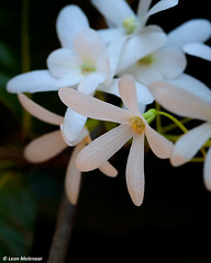 Flowers (leendert3) Tags: leonmolenaar southafrica flowers nature naturalhabitat macro naturethroughthelens