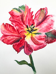 Sometimes, I surprise myself.... (judy dean) Tags: judydean 2019 art watercolour tulip red