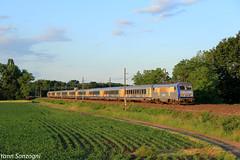 Au petit matin (Lion de Belfort) Tags: train chemin de fer champ alsace ostheim guémar maïs corail ter 200 sybic bb 26000 26144 grand est ligne 3 l3