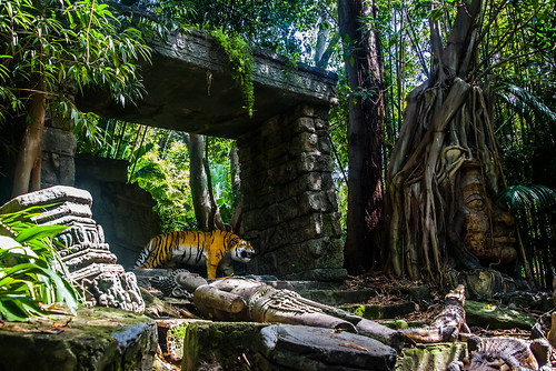 Jungle Cruise - Disneyland
