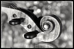 Music (christiane.grosskopf) Tags: smileonsaturday musicinbw violine