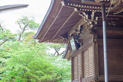 RAW_IMGP4812 (kirinoa) Tags: 日本 神奈川県 鎌倉市 紫陽花 藤沢市