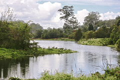 Brisbane River Colleges Crossing. (Lance CASTLE) Tags: water trees outdoor outside nature river green australia ipswichqueensland brisbaneriver plants winter behindthelens beautifulphoto park reserve clouds
