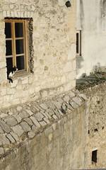 Fearless (sfryers) Tags: cat window vertical old town historic city architecture bosnia herzegovina bosnaihercegovina smc pentaxfa 35mm 12
