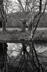 TreeGRASSeerT (czuerbig) Tags: leicam6ttl outside istillshootfilm film zeeland voigtlaender nokton3514 newyear netherlands 132 kodaktmaxp3200 holland hc110 ei1600 20â°c 20190101 135 20°c