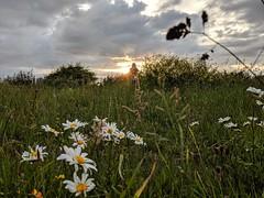 Grasslands (paul_taberner_photography) Tags: grasslands marshside southport