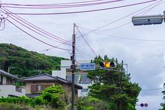 RAW_IMGP4818 (kirinoa) Tags: 日本 神奈川県 鎌倉市 紫陽花 藤沢市