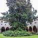 Basilica del Santo: la magnolia del  Chiostro
