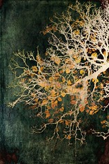 last leaves II (JoStephenX) Tags: wood tree branches fairytale winter faerie pagan wild gold silver woodland forest nature