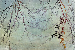 last leaves (JoStephenX) Tags: wood tree branches fairytale winter faerie pagan wild gold silver woodland forest nature