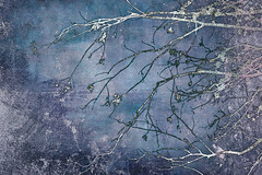 silver branches (JoStephenX) Tags: wood tree branches fairytale winter faerie pagan wild gold silver woodland forest nature