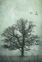 oak and crows (JoStephenX) Tags: wood tree branches fairytale winter faerie pagan wild gold silver woodland forest nature