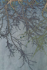 winter branches (JoStephenX) Tags: wood tree branches fairytale winter faerie pagan wild gold silver woodland forest nature
