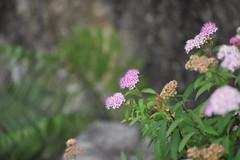 Tokugawa Garden 0046 (lorindadixon) Tags: aichi nagoya japan nature garden nagakute studyabroad personal nufs tokugawa tokugawaen travel ysu park