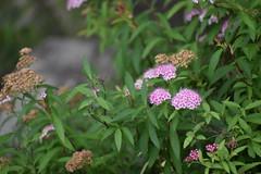 Tokugawa Garden 0044 (lorindadixon) Tags: aichi nagoya japan nature garden nagakute studyabroad personal nufs tokugawa tokugawaen travel ysu park