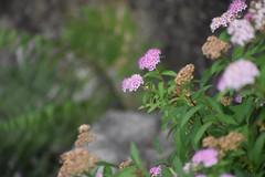 Tokugawa Garden 0043 (lorindadixon) Tags: aichi nagoya japan nature garden nagakute studyabroad personal nufs tokugawa tokugawaen travel ysu park